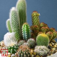 Cactus Seeds Mix (IMPORTED)