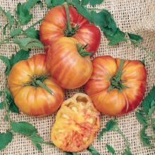 Tomato Old German Seeds heirloom Vegetable Seeds