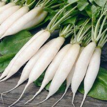Radish White Long seeds F1