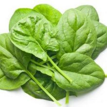 Baby Spinach Seeds Vegetable Seeds