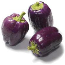 Capsicum Purple Seeds Vegetable Seeds
