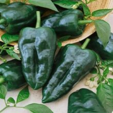 Poblano Ancho Chilli Seeds Vegetable Seeds