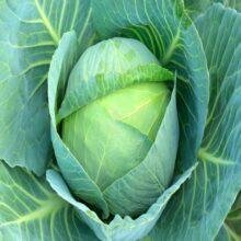 Cabbage Seeds F1 Vegetable Seeds