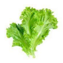 Lettuce Green Seeds Vegetable Seeds