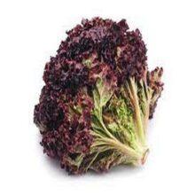 Lettuce Red Seeds Vegetable Seeds