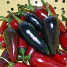 Black Hungarian Chilli Seeds Vegetable Seeds