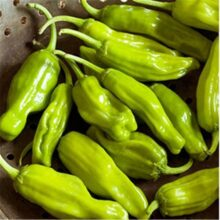 Pepper Pepperonicini Chilli Seeds Vegetable Seeds