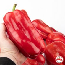 Capsicum Red Giant Seeds Vegetable Seeds