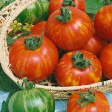 Tomato Tigerella Seeds heirloom Vegetable Seeds